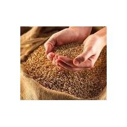 Blé biologique en grains en 25 kg