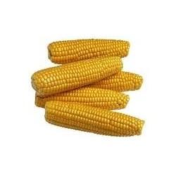 Mais biologique en grains en 25 kg